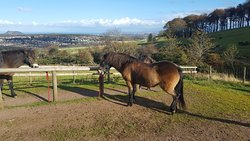 Edinburgh University Exmoor Pony Trekking
