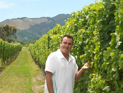 Mike's Wine Tours