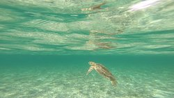 Sea turtles off their private island.