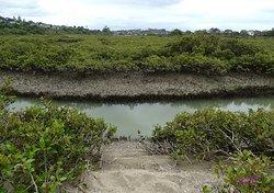Tohuna Torea Nature Reserve