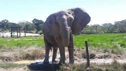 un  de los elefantes,