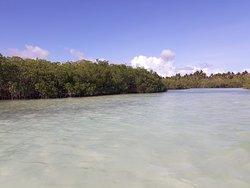 """Visita a los Manglares """"Excursion Saona, Canto de la Playa"""""""