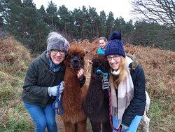 Us and the alpaca boys