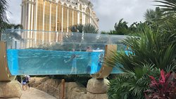 Amazing pool for your and old