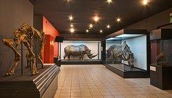 Muzeum Przyrodnicze Instytutu Systematyki i Ewolucji Zwierzat PAN