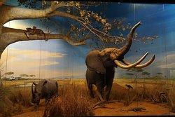 Olifant en neushoorn