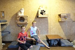 Doo Cat Cafe Phuket