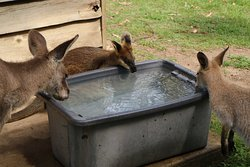It was a very hot day and these little guys were lapping up the cool water.