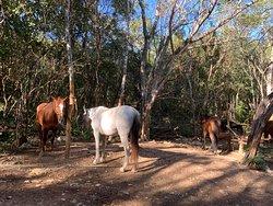 Ingresso con guardia circondati da bellissimi cavalli