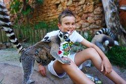 Krazy Wolrd Zoo
