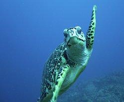 Curious turtle