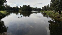 Stefański's pond
