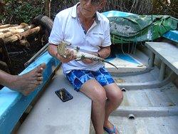 baby Croc again -Bentota river safari