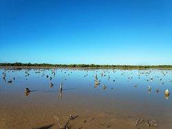 Affascinate tour tra le mangrovie!