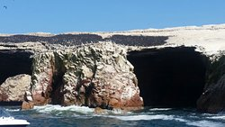 en las Islas ballestas, Paracas.
