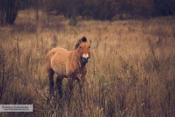 Wild horse in the Zone, near the Red Forest territory.