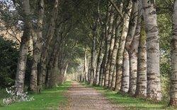 Heerlijk wandelen in de Broekpolder