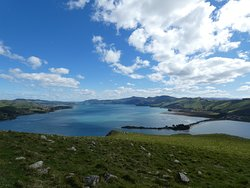 The view from the top of Taiaroa Head is second to none in Otago