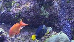 spettacolare ambientazione dei mari