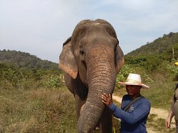 Hutsadin Elephant Foundation