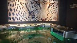 Safari spa...