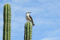 Buen lugar para avistar aves