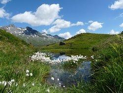 Laghetto con isoletta di Eriofori (Eriophorum Scheuchzeri) ai piedi del Gletscherweg Innergschloss - Osttirol, Austria.