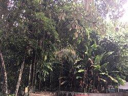 Bosque da Ciencia trees