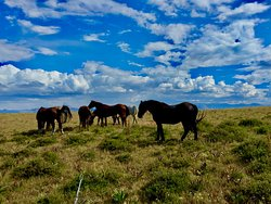 The horses taking a break on Table Mountail; all day trail