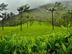 #Munnar  Munnar is a town in the Western Ghats mountain range in India's Kerala state. A hill station and former resort for the British Raj elite, it's surrounded by rolling hills dotted with tea plantations established in the late 19th century.