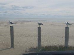 Gulls at the beach