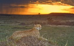 Evening Game drive with Kenya Tru Nomads Tours in Mara Reserve