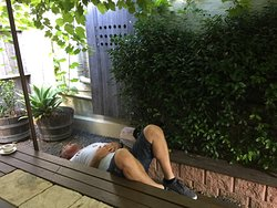 This customer found a tranquil place in the garden to have a nanna nap after lunch