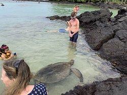 Sea turtles swimming close to the shore