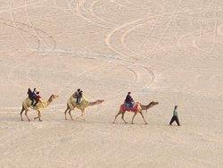Camel riding a group