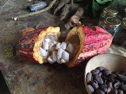 Dougaldston Estate inside of a nut