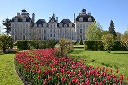 Au printemps, plus de 120 000 tulipes fleurissent dans le parc.  ©️C. de Vibraye
