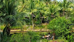 Best place in Jungle