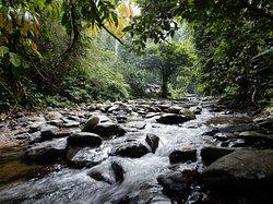 Jungle of Gunung Leuser National Park