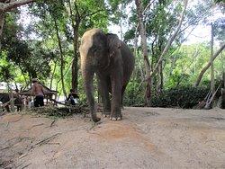 Un gros elephant