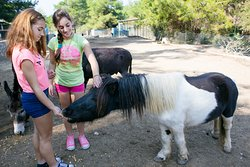 Play, pet, feed and interact with the animals of Farma of Rhodes! A unique interacting experience!