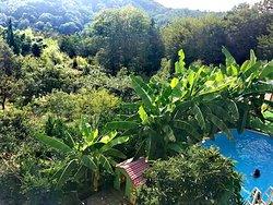 Вид на сад и бассейн с балкона номера