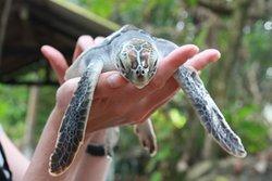 Galbokka Sea Turtle Hatchery