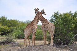An Amazing Family Safari Experience