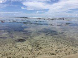 Wasserstand sehr niedrig (Januar), schwimmen im Meer nicht möglich:-(