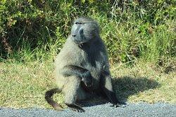 Ulungele Tours & Safari's