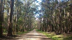 Reserva Forestal Chaviyu