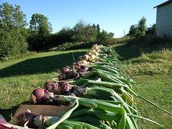 Récolte du jardin, produits frais, puis conserves pour une table d'hôtes toute l'année !