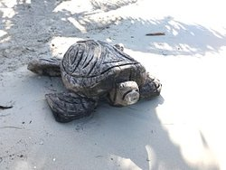 Hand carved turtle on the perfect beach