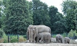 Elephant Herd at Dublin Zoo